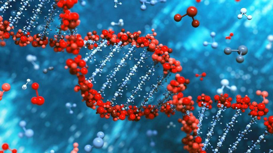z20096164IER,Ludzki-genom-
